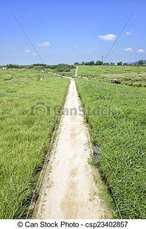 Stock Images of straight path in a silver grass field with blue.