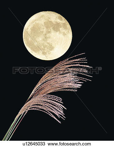 Stock Photo of The full moon and silver grass, low angle view.