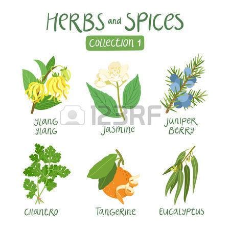 Silver herbs clipart #17