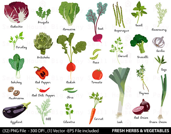 Vegetable Digital Clipart Fresh Herbs Clipart Vegetable Clip.