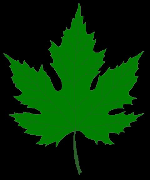 green clip art silver maple.