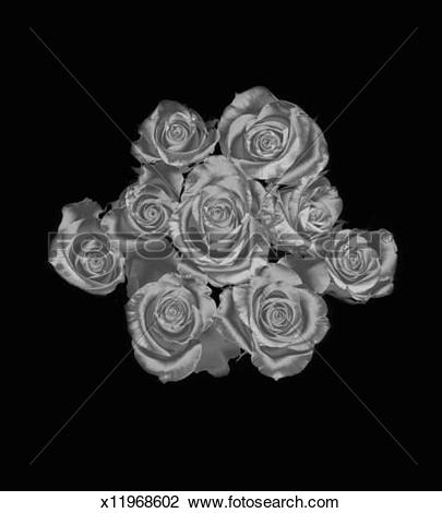 Stock Photo of Silver roses on a black background x11968602.