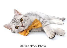 Pictures of Black silver tabby kitten lying lazy.