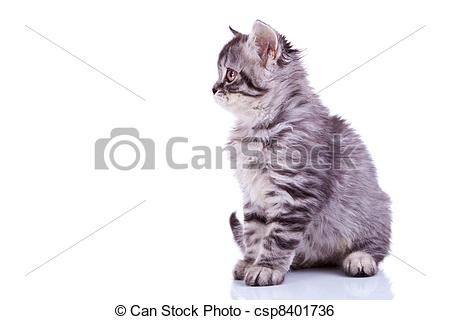 Stock Image of silver tabby baby cat looking at something.