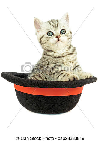 Stock Photography of Young silver tabby cat in black hat.