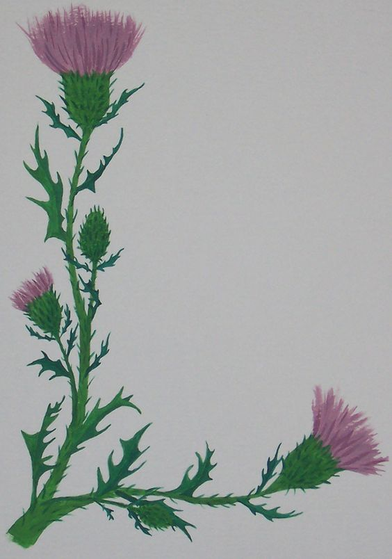 Thistles, Scottish thistle and Silver on Pinterest.