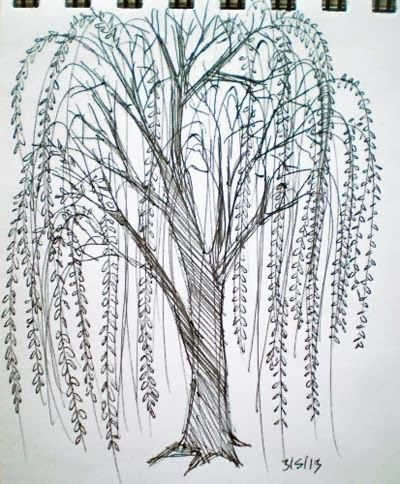 High detailed willow tree silhouette, 32666, download royalty.