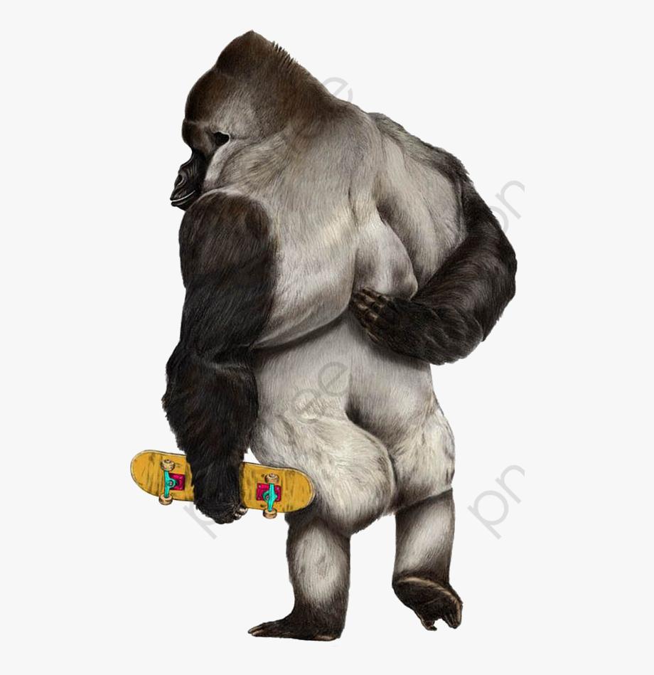 Gorilla Clipart Realistic.
