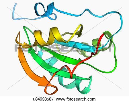 Stock Illustration of Simian virus SV40 large T antigen u84933587.