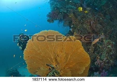 Stock Photo of Similan Islands Underwater Park, Thailand.