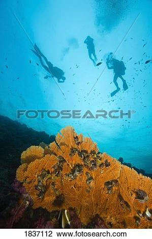 Stock Photo of Scuba divers, Richelieu Rock, Mu Koh Surin National.