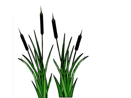 Similiar Cattail Clip Art Keywords.