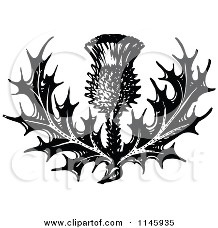 Clipart of Retro Vintage Black and White Thistle Flower 2.