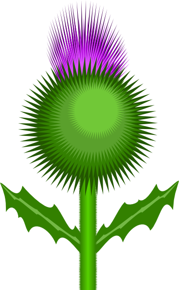 Scottish Thistle Clip Art at Clker.com.