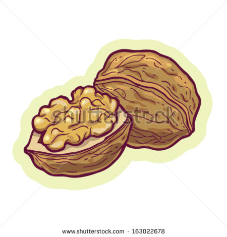 Similar To Walnut Clipart Clipground