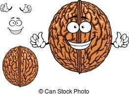 Vectors Illustration of Walnuts and a cracked walnut Vector.