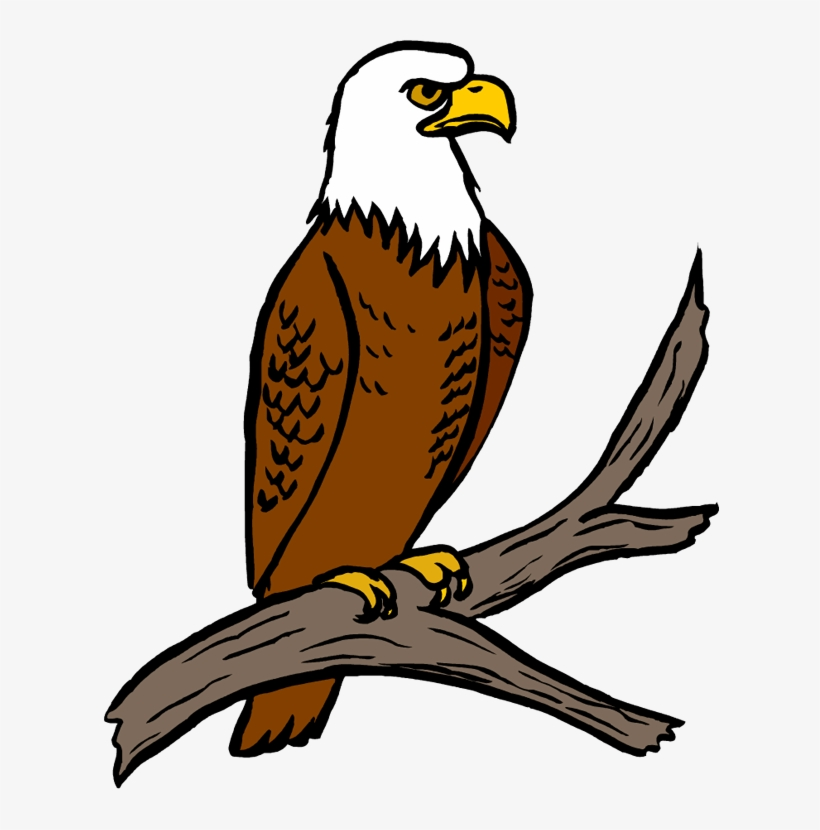 Download White Tailed Eagle Clipart Simple.