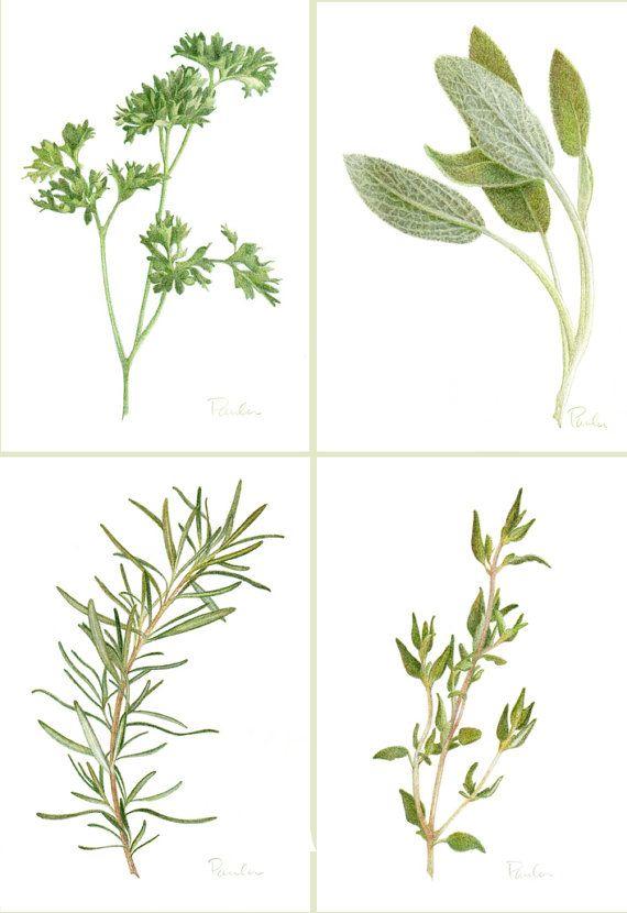 1000+ ideas about Herbs Illustration on Pinterest.