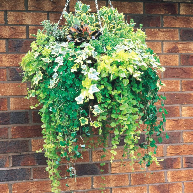 1000+ ideas about Winter Hanging Baskets on Pinterest.