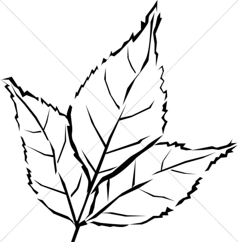 Woodcut Style Tri Leaf.