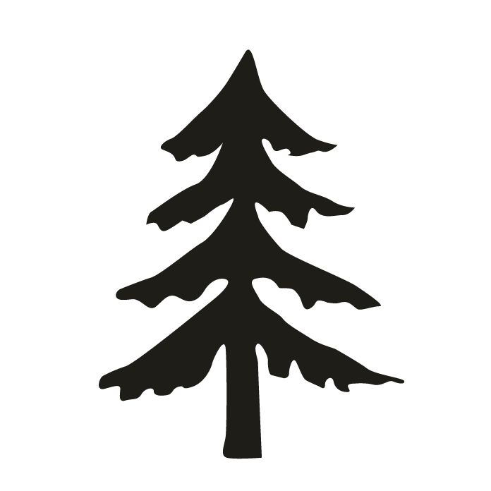 Fir Pine Spruce Christmas tree.