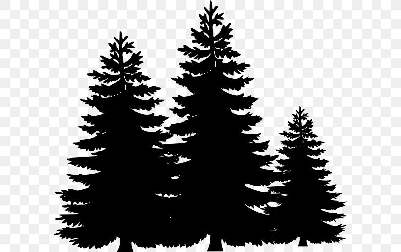 Pine Tree Fir Clip Art, PNG, 600x517px, Pine, Black And.