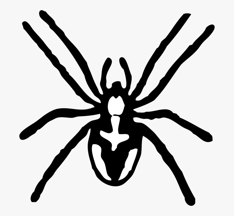 Spider Black And White Spider Clipart Black And White.