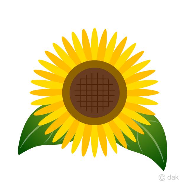 Free Sunflower Flower and Leaves Clipart Image|Illustoon.