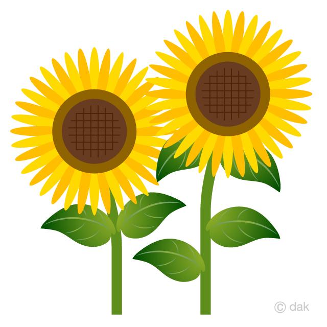 Free Two Simple Sunflower Clipart Image|Illustoon.