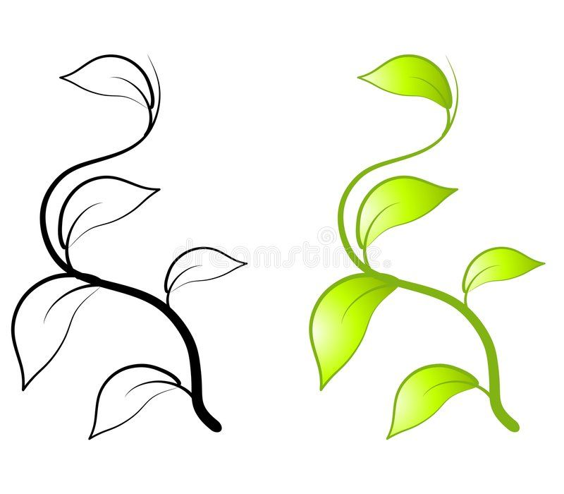 Image result for climbing vine clipart.