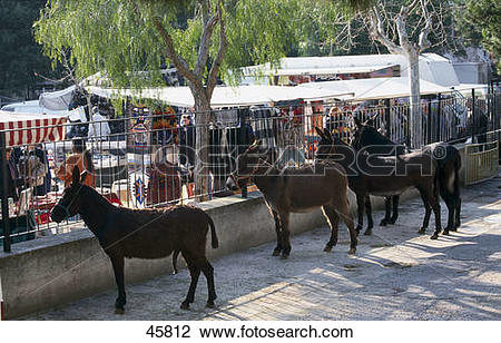 Stock Photo of Four donkeys on street near cattle market, Sineu.