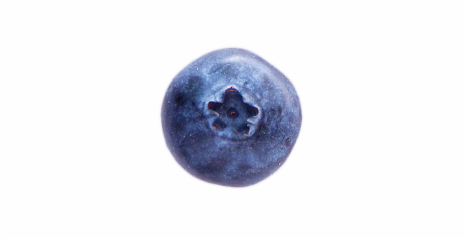 A Shadow A Ripe Blueberry.