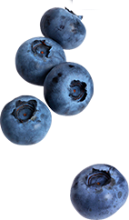 Single blueberry png 1 » PNG Image.