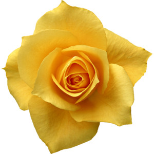 Free Flower Clip Art Single Yellow Rose Graphic from Victori.