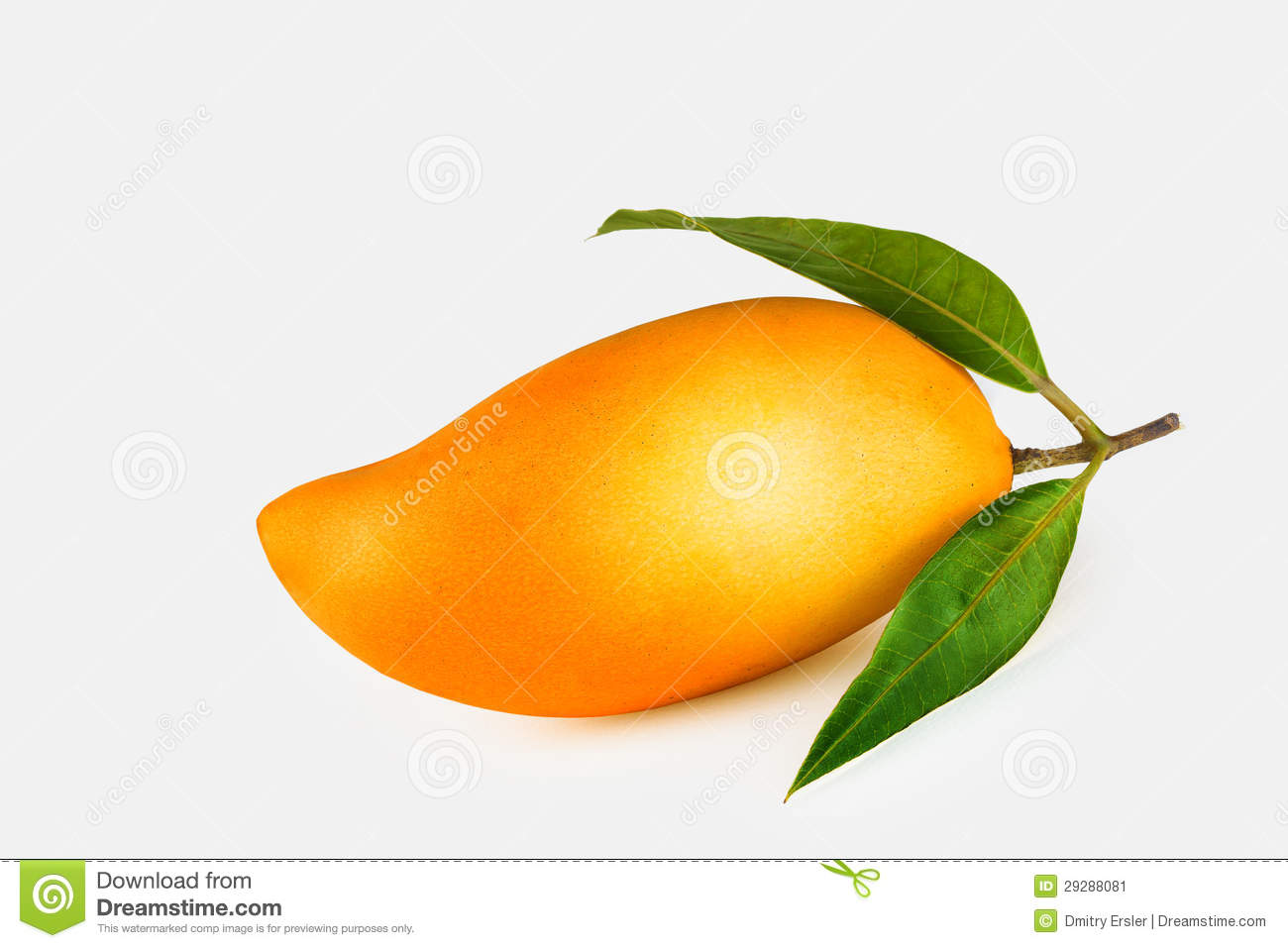 Single Mango Stock Photos, Images, & Pictures.