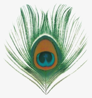 Peacock Feather PNG, Transparent Peacock Feather PNG Image.