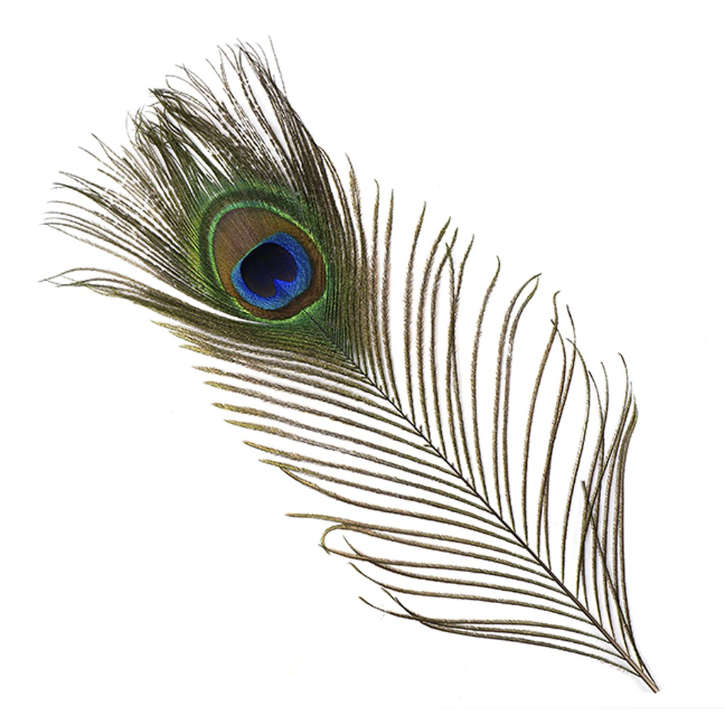 Free Peacock Feathers Png, Download Free Clip Art, Free Clip.