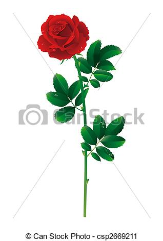 Single rose Stock Illustration Images. 6,626 Single rose.