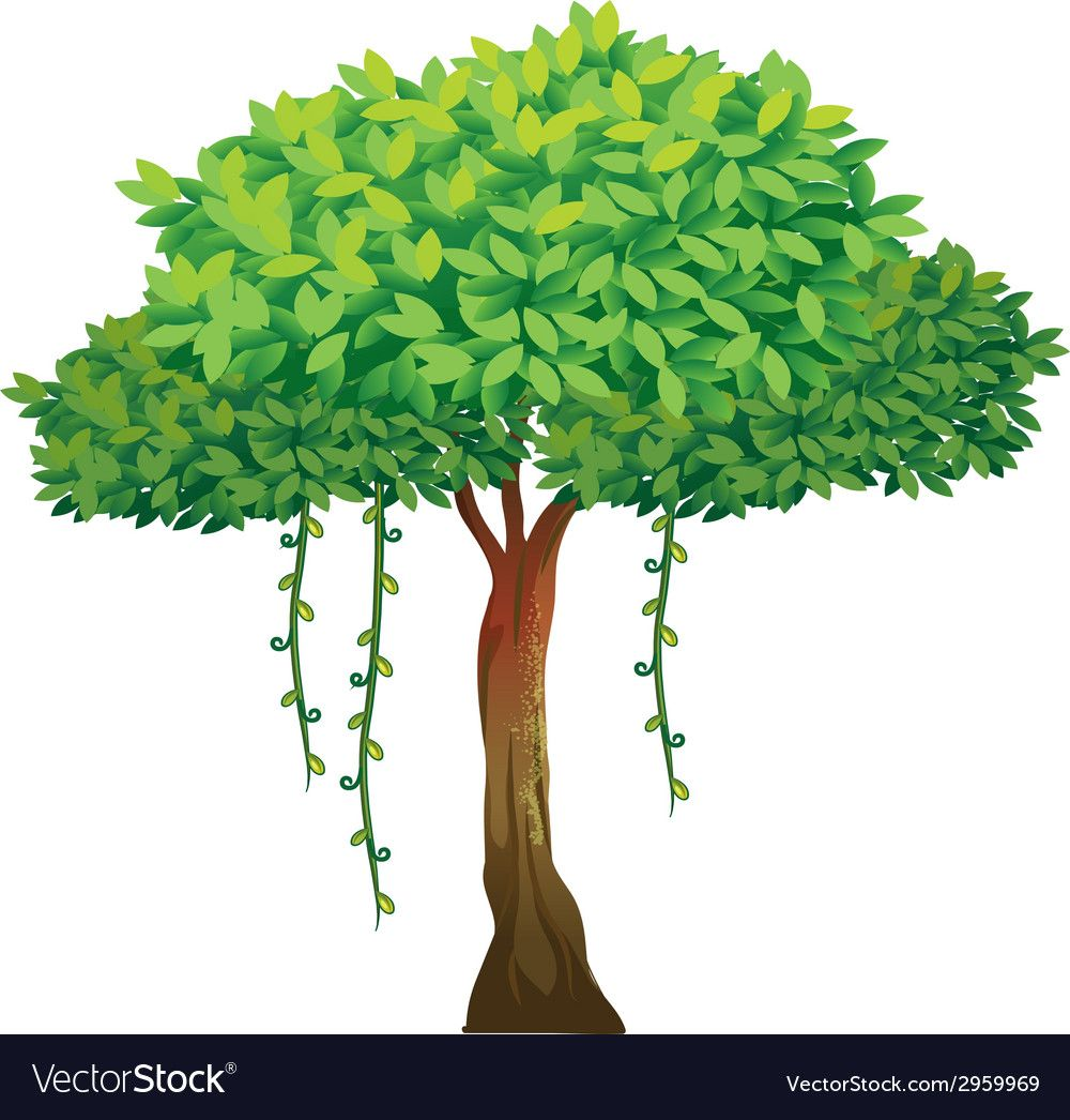 Tree Royalty Free Vector Image.