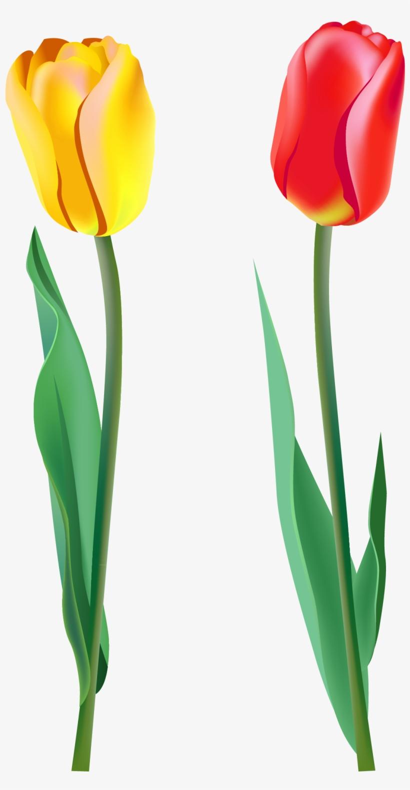 Clipart Single Tulip Transparent PNG.