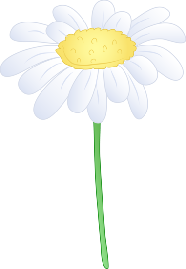 Single White Daisy Flower.