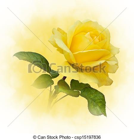 Stock Photos of Golden Yellow Rose.