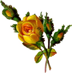 Single yellow rose clipart.