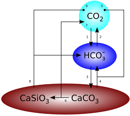 Kohlenstoffzyklus.