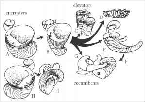 Class Gastropoda.