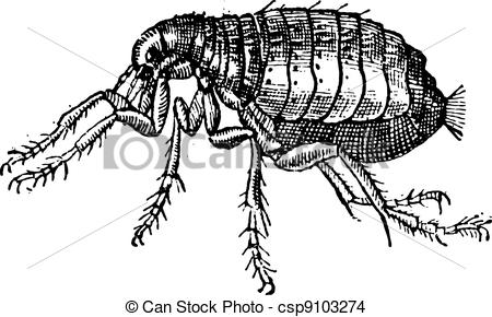 Siphonaptera Illustrations and Stock Art. 61 Siphonaptera.