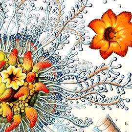 The Art of Ernst Haeckel.