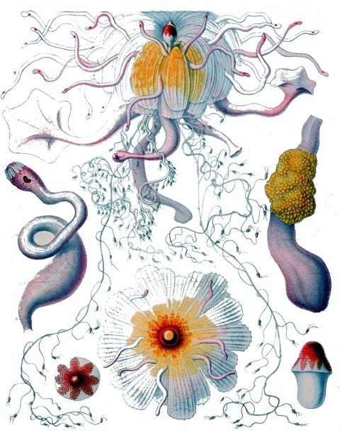 Plankton Art Gallery.