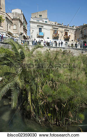 "Stock Photography of ""Font of Arethusa with papyrus, Siracusa."