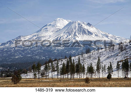Stock Photograph of Trees with snowcapped mountains, Mt Shasta.